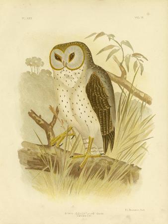 gracius-broinowski-delicate-owl-1891