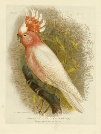 gracius-broinowski-leadbeater-s-cockatoo-1891