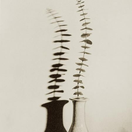 graeme-harris-eucalyptus-leaves-in-vase