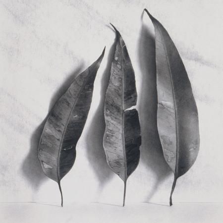 graeme-harris-leaves-on-white-background