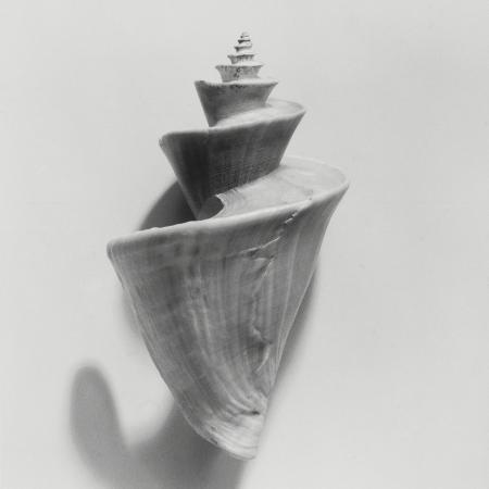 graeme-harris-seashell