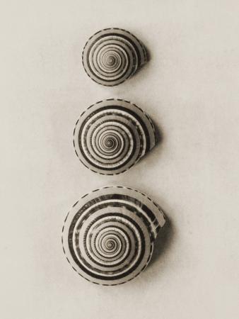 graeme-harris-seashells