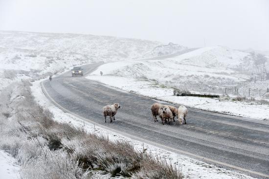 graham-lawrence-sheep-in-a-wintry-landscape-on-the-mynydd-epynt-moorland-powys-wales-united-kingdom-europe