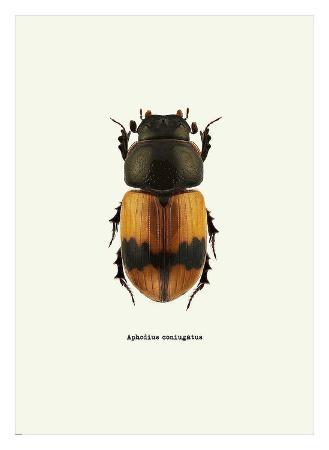 graphinc-beetle-orange