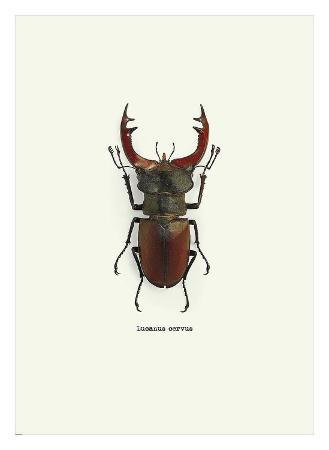 graphinc-beetle-red