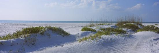 grass-on-the-beach-lido-beach-lido-key-sarasota-florida-usa