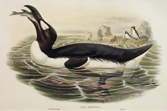 great-auk-pinguinus-impennis