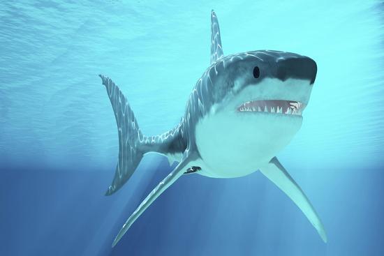 great-white-shark-swimming-underwater
