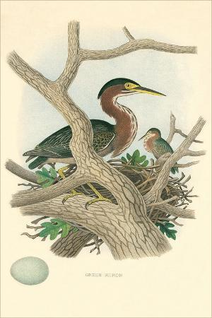 green-heron-nest-and-eggs