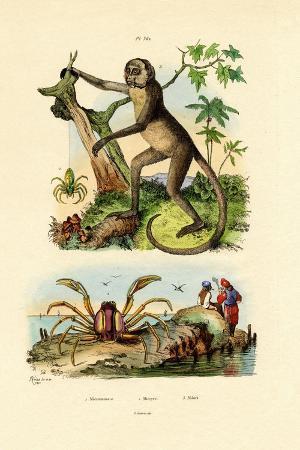 green-huntsman-spider-1833-39