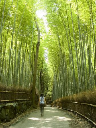 greg-elms-bamboo-forest-arashiyama