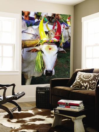 greg-elms-bull-decorated-for-pongal-festival-mahabalipuram-tamil-nadu-india