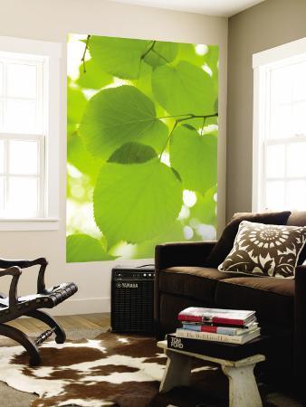 greg-elms-leaves-of-linden-tree-botanic-gardens