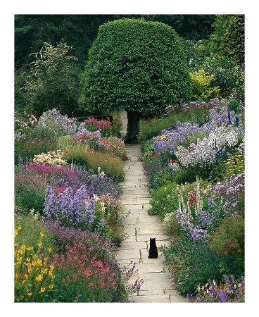 greg-gawlowski-the-garden-cat