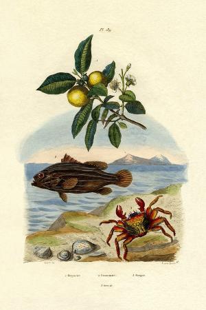 guava-1833-39