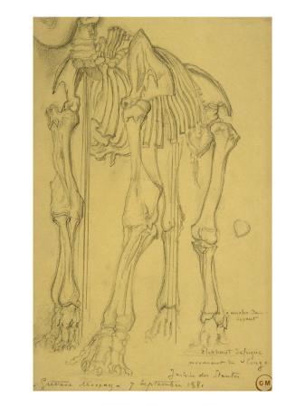 gustave-moreau-squelette-d-elephant