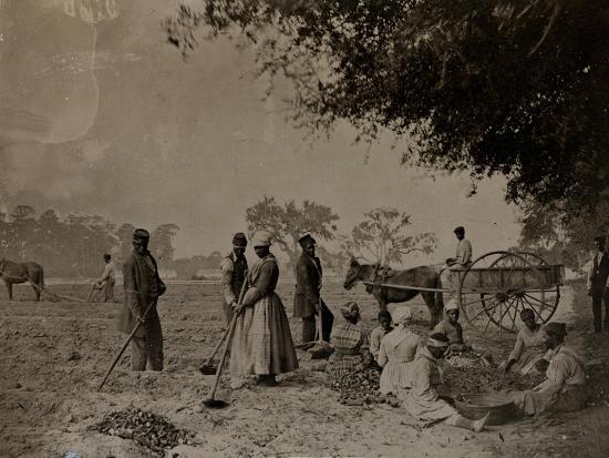 h-p-moore-planting-sweet-potatoes-hopkinson-s-plantation-edislo-island-south-carolina-1862