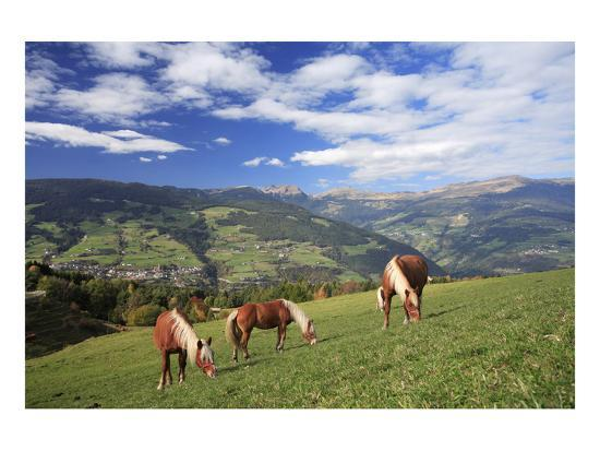 haflinger-horses-on-a-mountain-pasture-valle-d-isarco-dolomites-province-of-trento-italy