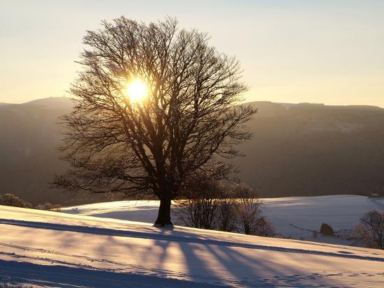 hans-peter-merten-winter-landscape-at-schauinsland-black-forest-baden-wurttemberg-germany-europe