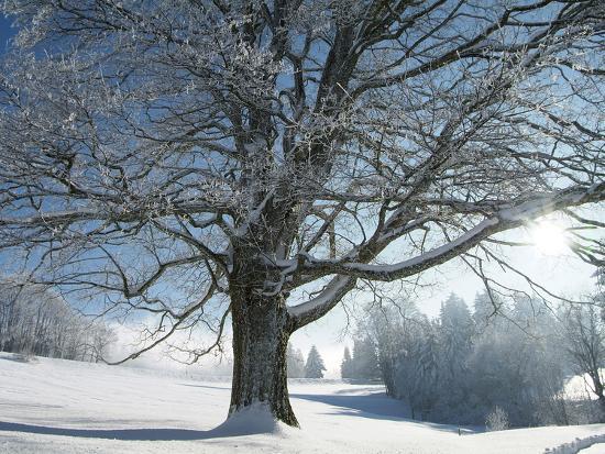 hans-peter-merten-winter-landscape-at-thurner-black-forest-baden-wurttemberg-germany-europe