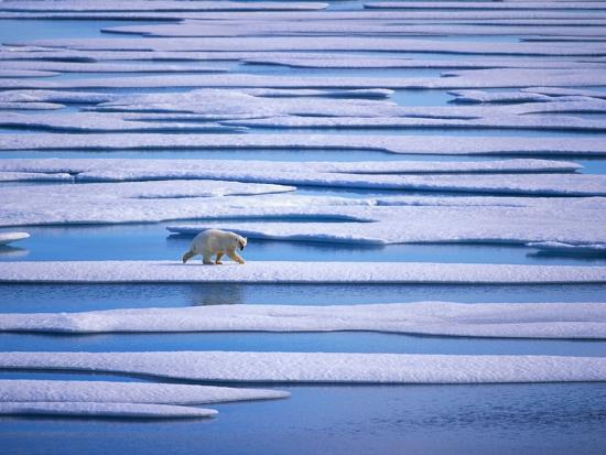 hans-strand-polar-bear-on-pack-ice
