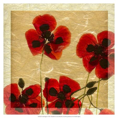 harold-davis-greek-poppies-i
