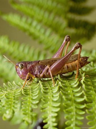 harold-taylor-grasshopper-spain