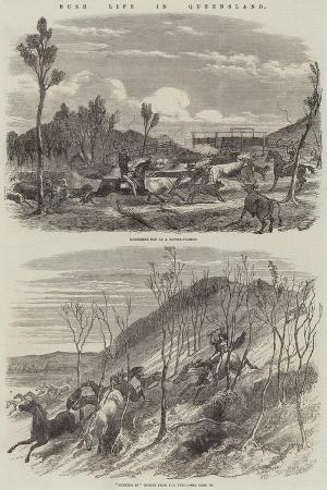 harrison-william-weir-bush-life-in-queensland