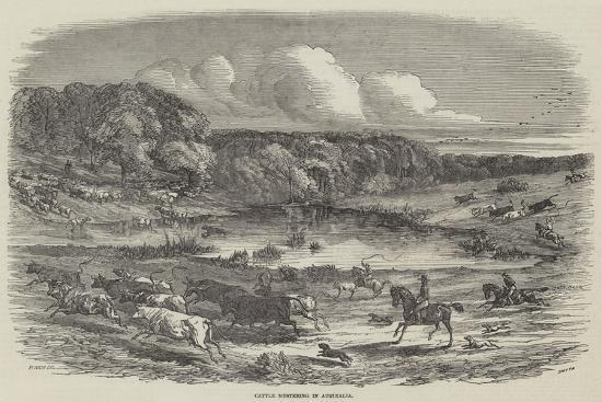 harrison-william-weir-cattle-mustering-in-australia