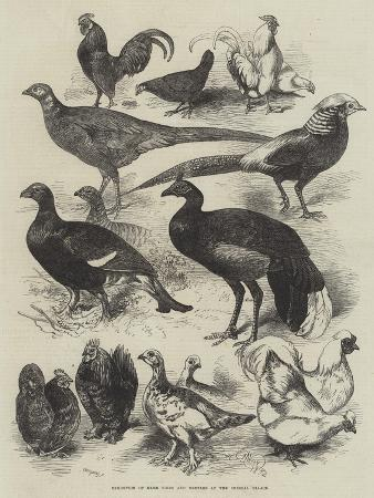harrison-william-weir-exhibition-of-game-birds-and-bantams-at-the-crystal-palace