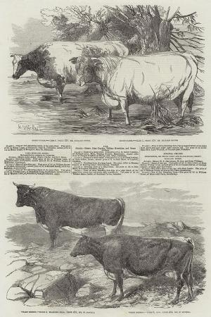 harrison-william-weir-exhibition-of-the-royal-agricultural-society-of-england