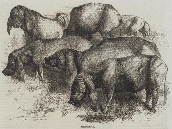 harrison-william-weir-japanese-pigs