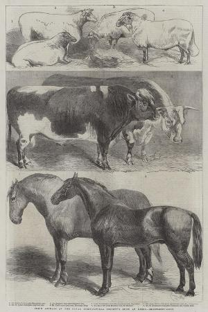 harrison-william-weir-prize-animals-at-the-royal-agricultural-society-s-show-at-leeds
