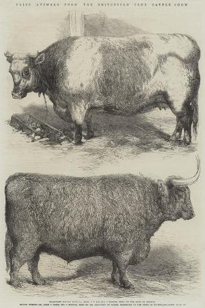 harrison-william-weir-prize-animals-from-the-smithfield-club-cattle-show