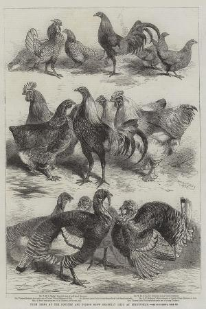 harrison-william-weir-prize-birds-at-the-poultry-and-pigeon-show-recently-held-at-birmingham