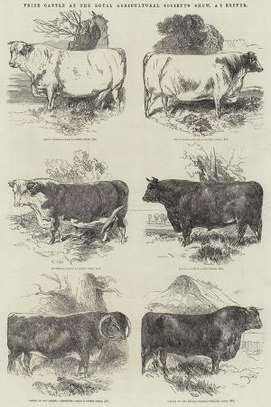 harrison-william-weir-prize-cattle-at-the-royal-agricultural-society-s-show-at-exeter
