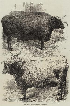 harrison-william-weir-prize-oxen-at-the-smithfield-club-cattle-show
