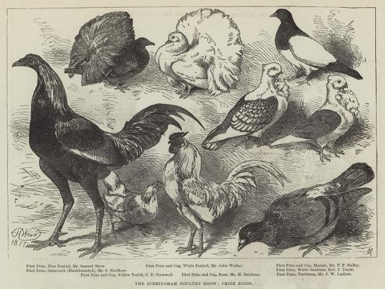 harrison-william-weir-the-birmingham-poultry-show-prize-birds