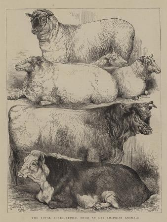 harrison-william-weir-the-royal-agricultural-show-at-oxford-prize-animals