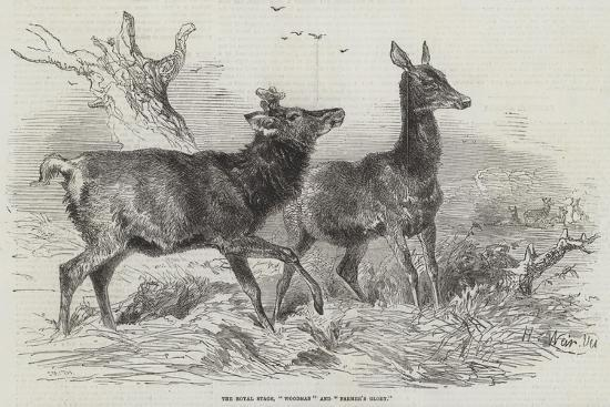 harrison-william-weir-the-royal-stags-woodman-and-farmer-s-glory