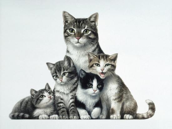 harro-maass-cat-family