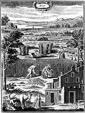 harvest-time-1762