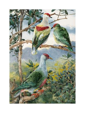 hashime-murayama-painting-of-three-fruit-pigeons-perched-on-branches