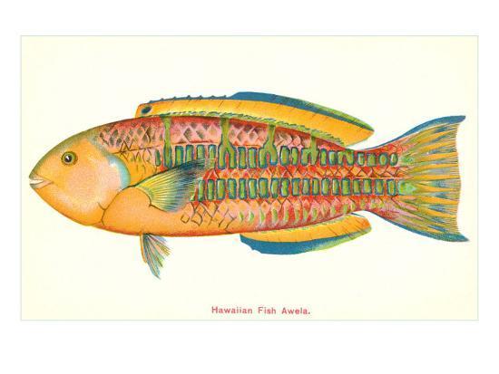 hawaiian-fish-awela