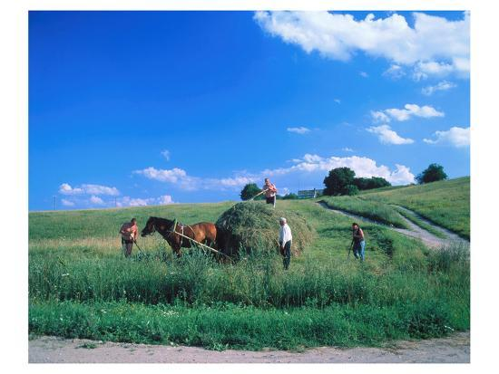 haymaking-near-trakai-lithuania-baltic-states