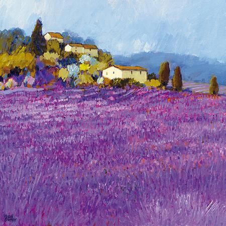 hazel-barker-wild-lavender-provence