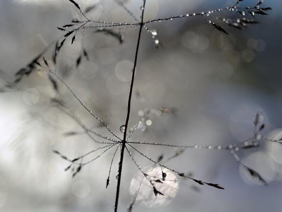heidi-westum-after-the-rain