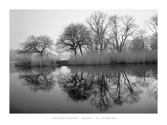 henri-silberman-prospect-park-morning