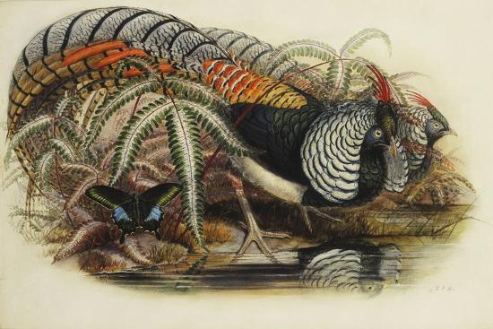 henry-constantine-richter-lady-amherst-s-pheasant