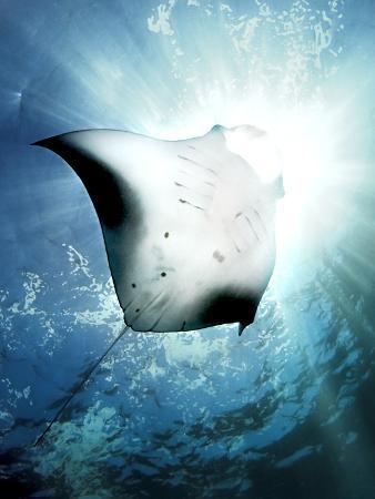 henry-jager-sun-diver